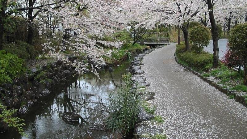 Le parc Shinsuin au printemps